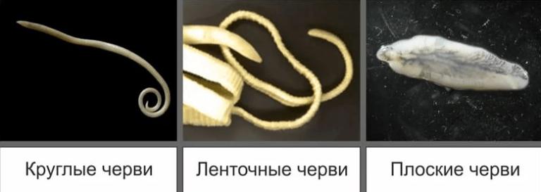 Лечение глистов у взрослых